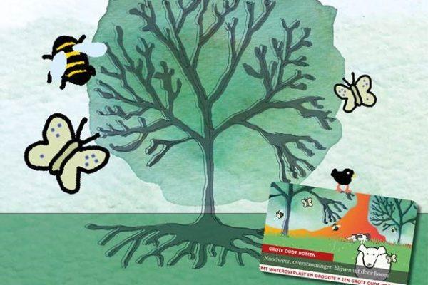 De waarde van oude bomen